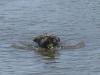 Django zwemmen A