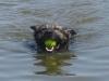 Django zwemmen B