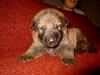 Pup Django  Caya a