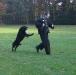 dodge-aanval-wedstrijd-assen