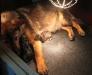 Bayca met pup 1dgn