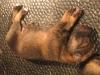 Pup H nest 1dgn